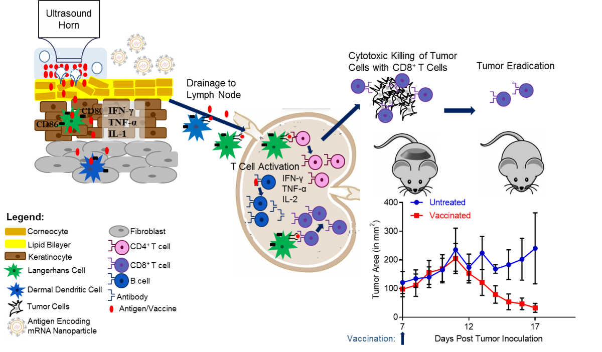 antibodies ideal for targeting An ideal target antigen would only be expressed on to targeting the tumour itself, antibodies can also be used development of antibodies for cancer therapy.